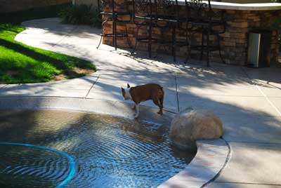 pool service clairemont with the dog out enjoying the swimming pool